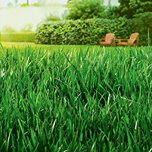 Picture of Green Healthy Grass