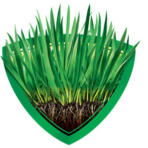 Image of Healthy Grass