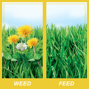 Comparison Image of a lawn with and without liquid weed and feed