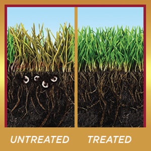 Image of grass both untreated and treated, Untreated has grubs in the soil, and treated has no grubs