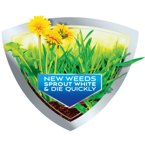 Image of Dandelions over top of grass with caption- New Weeds Sprout White and Die Quickly