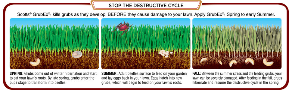 Scotts GrubEx, Kills grubs as they develop, before they cause damage to your lawn. Apply GrubEX, spring to early summer