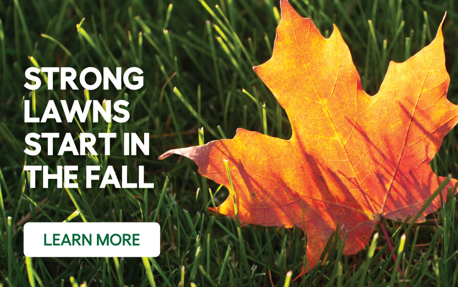 Strong Lawns start in the fall