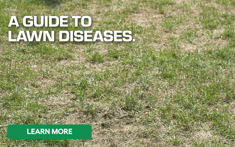 Photo of a Patchy Lawn - A Guide to Lawn Diseases - Learn More