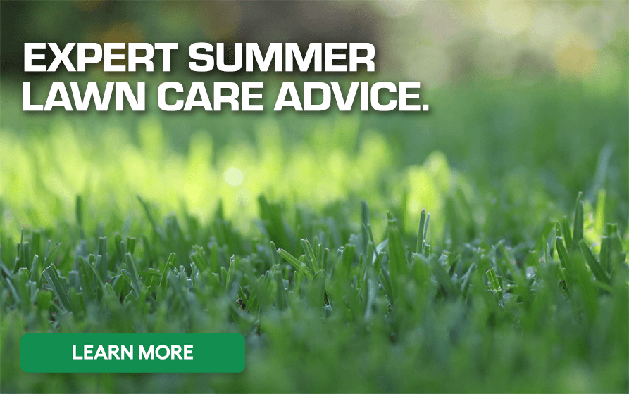 Green Grass with Caption - Expert Summer Lawn Care Advice - Learn More