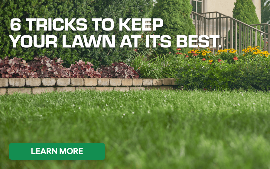 6 Tricks to Keep Your Lawn at its Best - Learn More