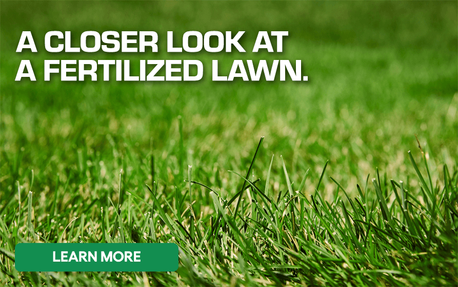 A Closer Look at a Fertilized Lawn - Learn More