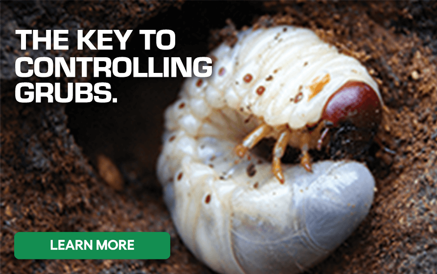 The Key to Controlling Grubs - Learn More
