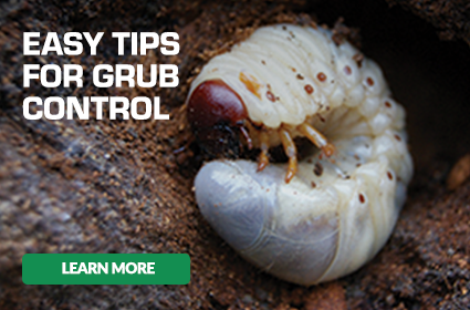 Easy Tips For Grub Control