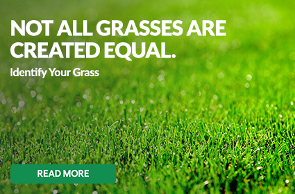 Not All Grasses Are Created Equal