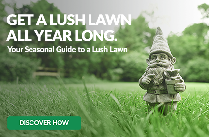 Get a Lush Lawn All Year Long