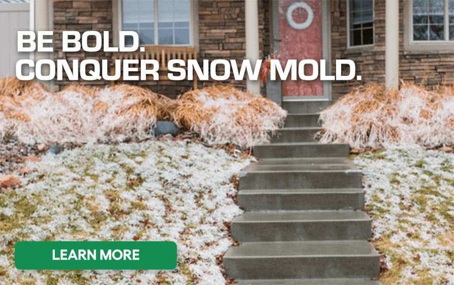 Be Bold Conquer Snow Mold