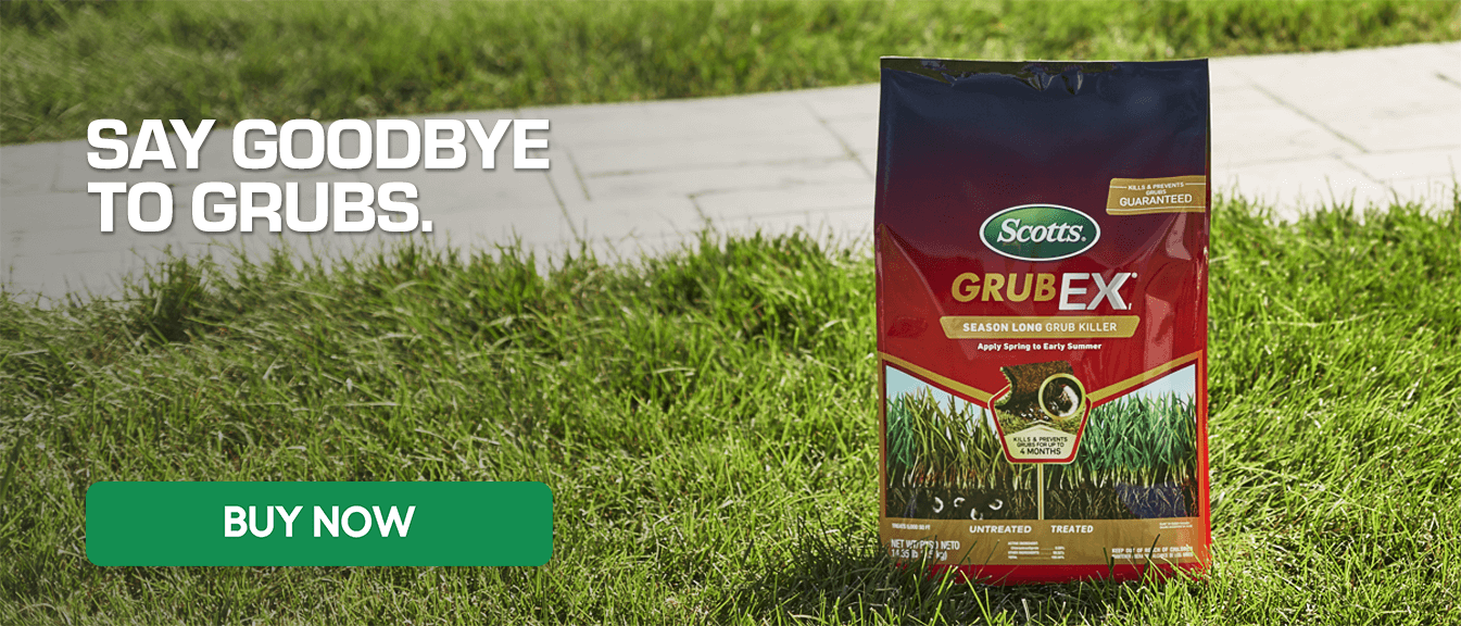 Say Goodbye to Grubs - Buy Now