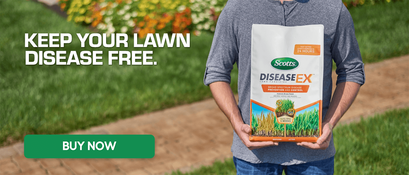 Keep Your Lawn Disease Free - DiseaseEX - Buy Now