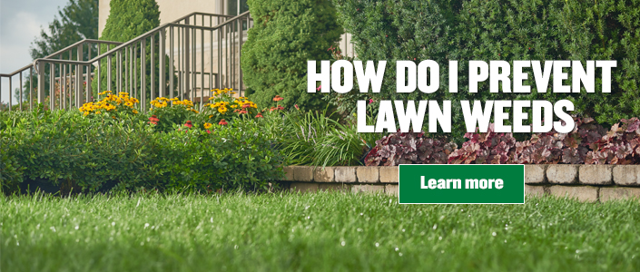 Prevent lawn weeds tile with green lawn and flowers in background