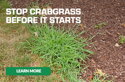 scotts stop crabgrass before it starts