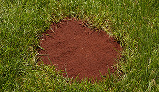 How To Repair A Lawn Amp Seed Bare Patches Scotts