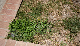 How To Get Rid Of Crabgrass Lawn Weeds Scotts