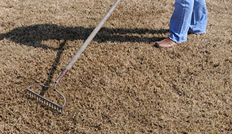How to Start a New Lawn from Grass Seed