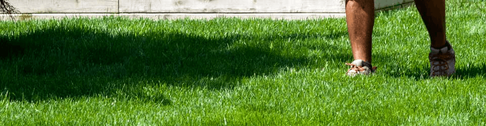 Person Walking in Green Grass