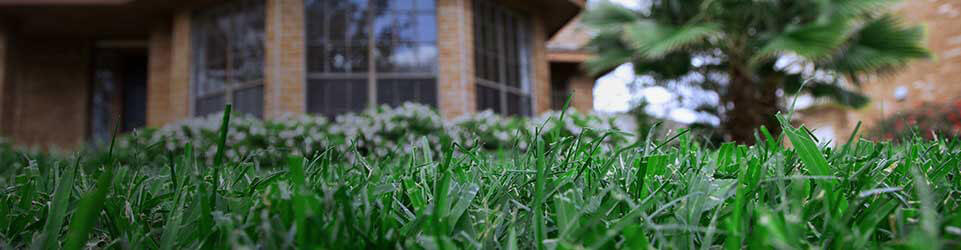 Green Weed Free Grass