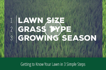How to Choose Lawn Products