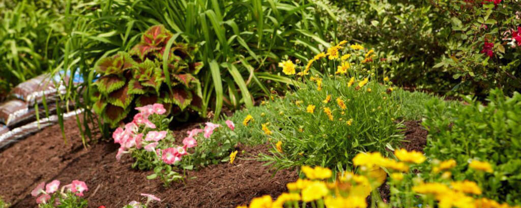 Beautiful Mulched Landscape Beds