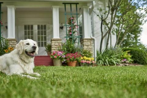 Dog sitting on the lawn with a house in the background - Getting to Know Your Lawn in 3 Simple Steps