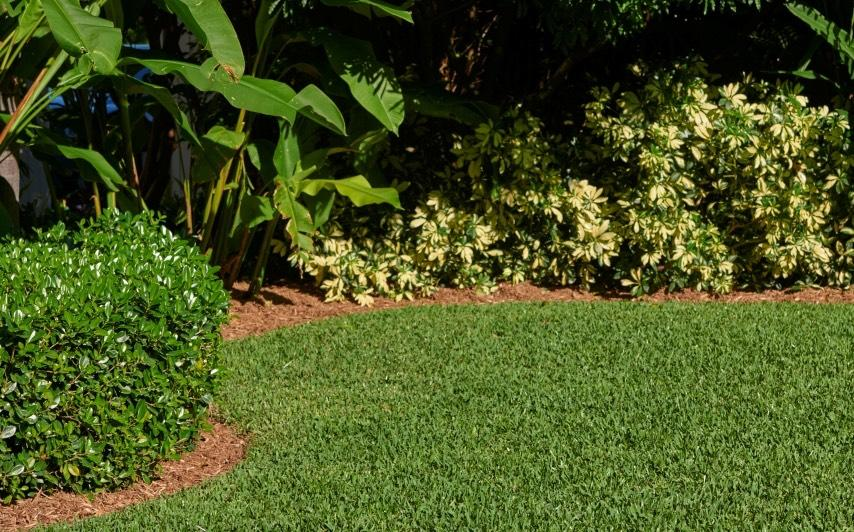 A St. Augustine grass lawn and with a well mulch garden.