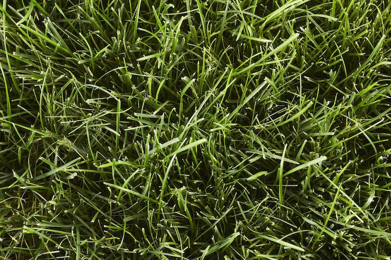 Type of Grass: Bluegrass Rye Fescue