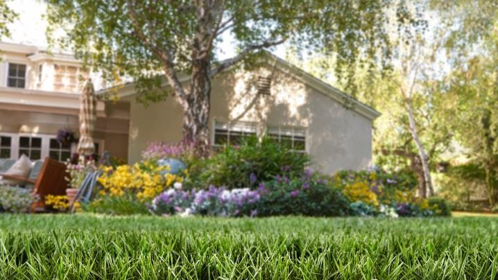 Lawn Projects: suburban yard