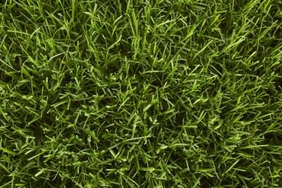 A lawn with Bermuda grass.