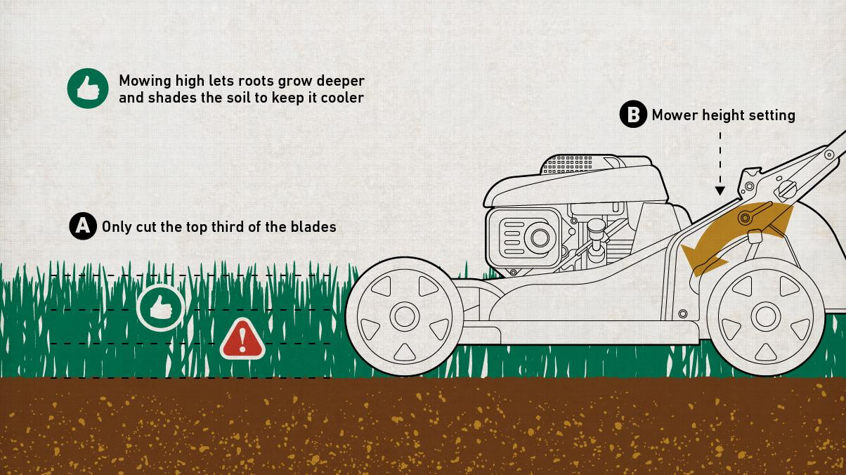 "The Scotts Way Presents: Illustration of a lawn mower height guide - ""Mower high lets roots grow deeper and shades the soil to keep it cooler. Only cut to the top third of the blades."""
