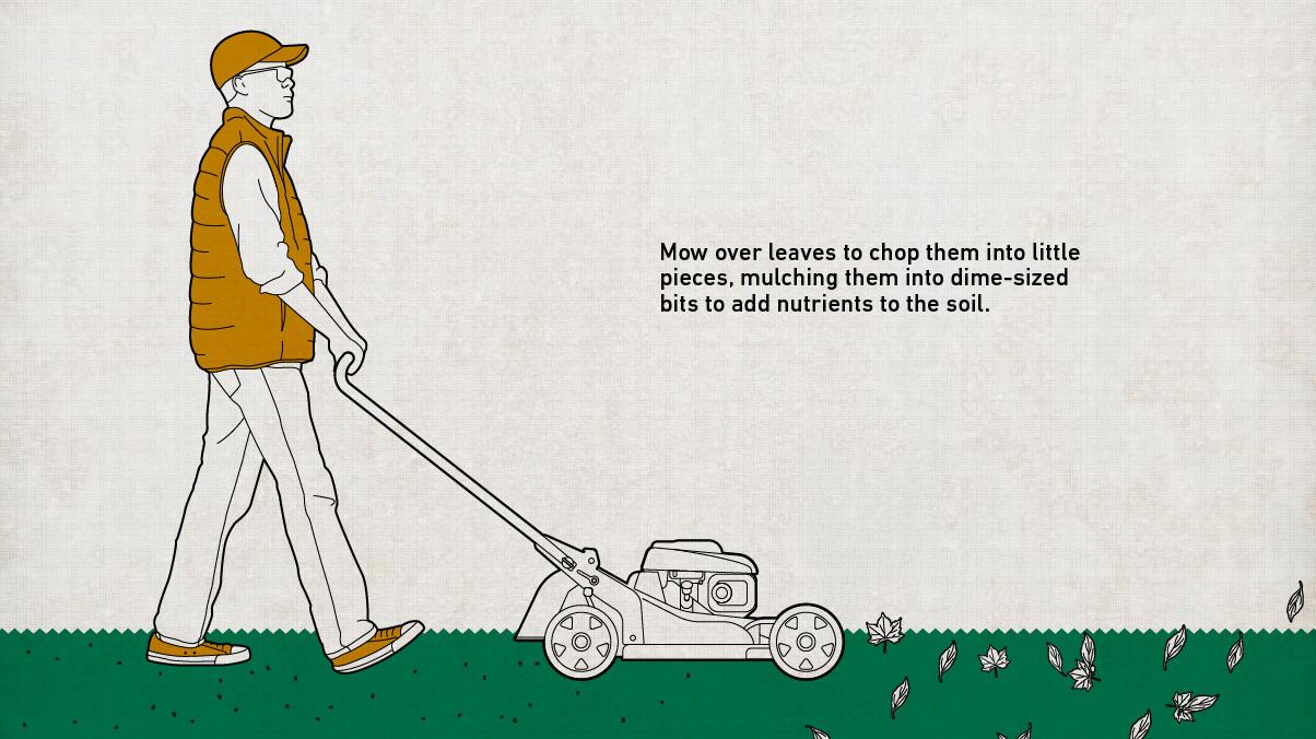 Illustration of a man mowing over fallen leaves to rake them into the soil for nutrients.
