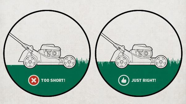 "Summer Lawn Care Tips: illustrations showing lawn mower and grass height (""too short"" and ""just right"