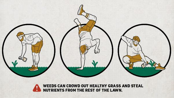 Illustration of man spraying weed, doing handstand, lunging to spray weed; text: Weeds can crowd out healthy grass and steal nutrients from the rest of the lawn