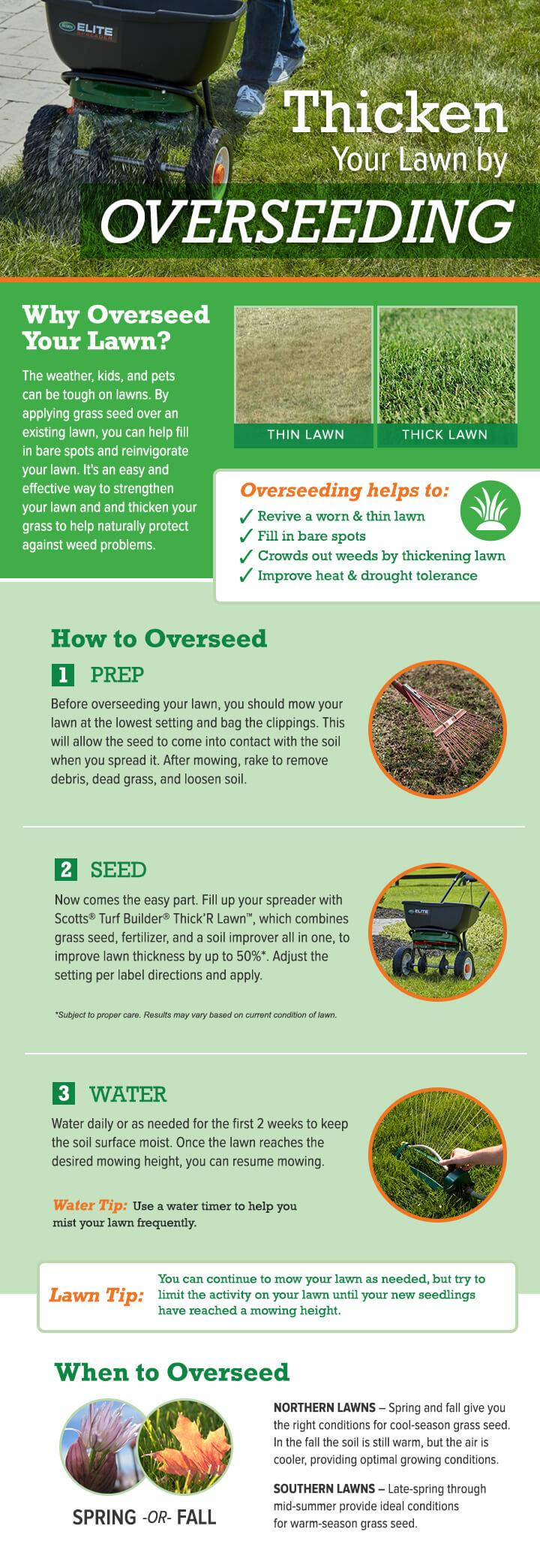 Get a thicker lawn by overseeding (infographic)