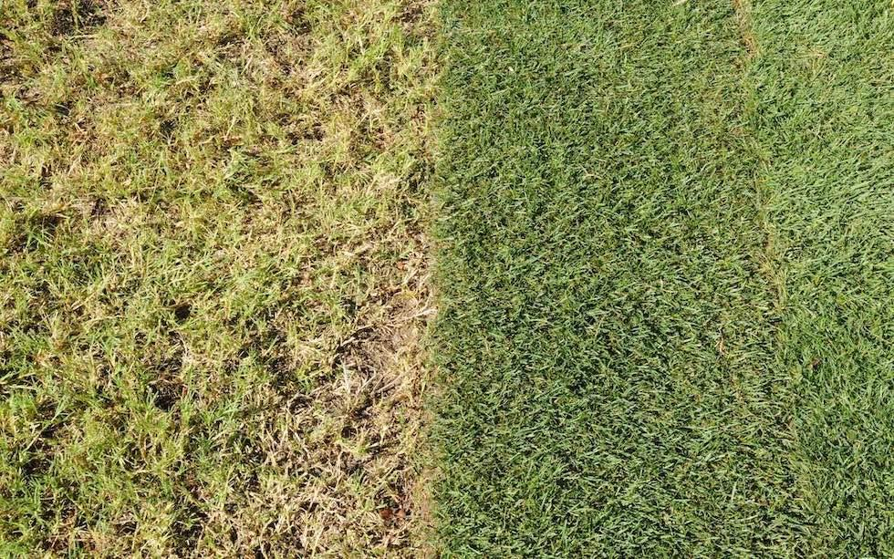 How To Repair A Lawn Seed Bare Patches Scotts