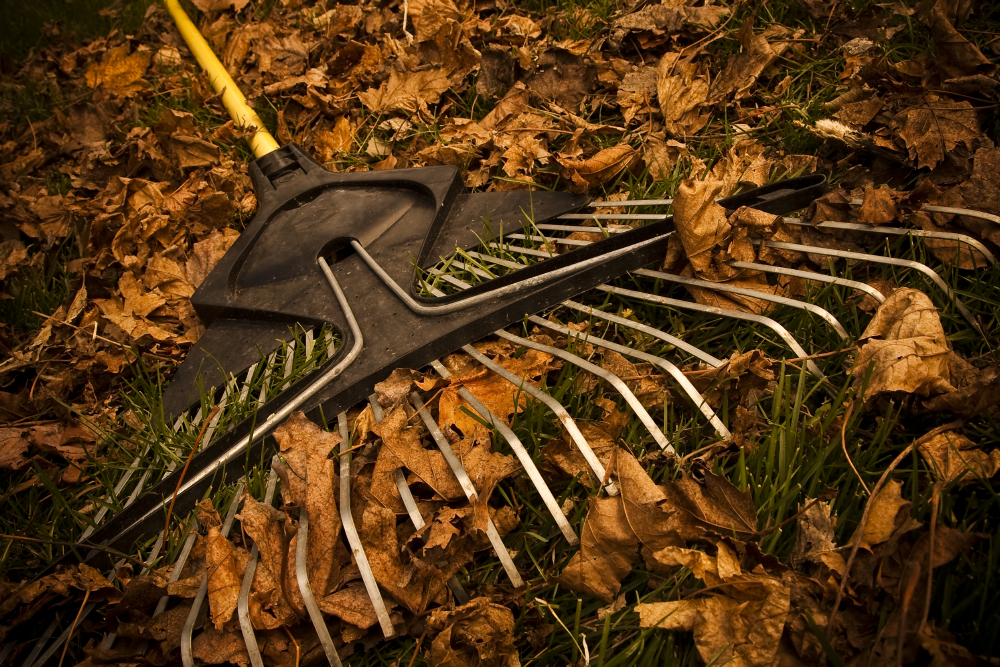 A rake sitting on a pile of leaves.