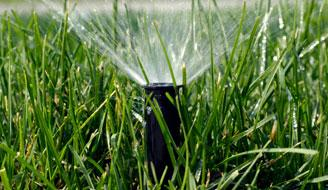 how to get rid of water grass in lawn