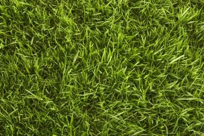 A lawn with Bentgrass.