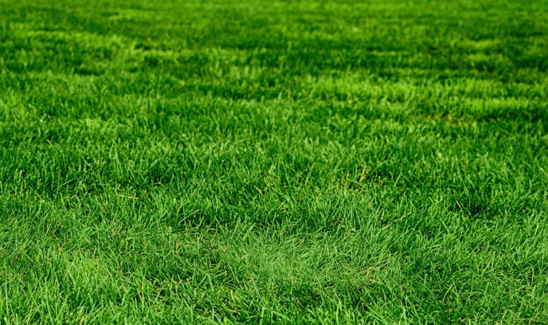 Learn How Fertilizer Helps Your Gr Grow Improves Lawn