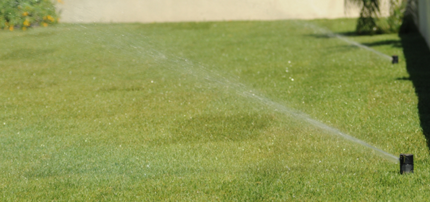 Summer Lawn Care Tips