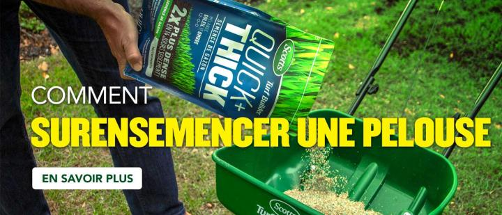 How to overseed your lawn.