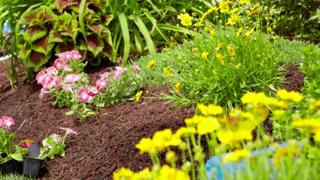 A mulch bed filled with plants.