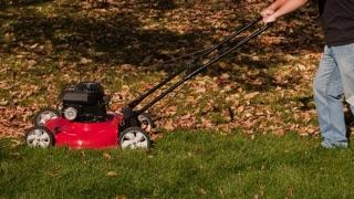A man pushing a red lawn mower on a green lawn.