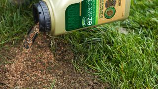 Lawn Projects: applying EZ SEED