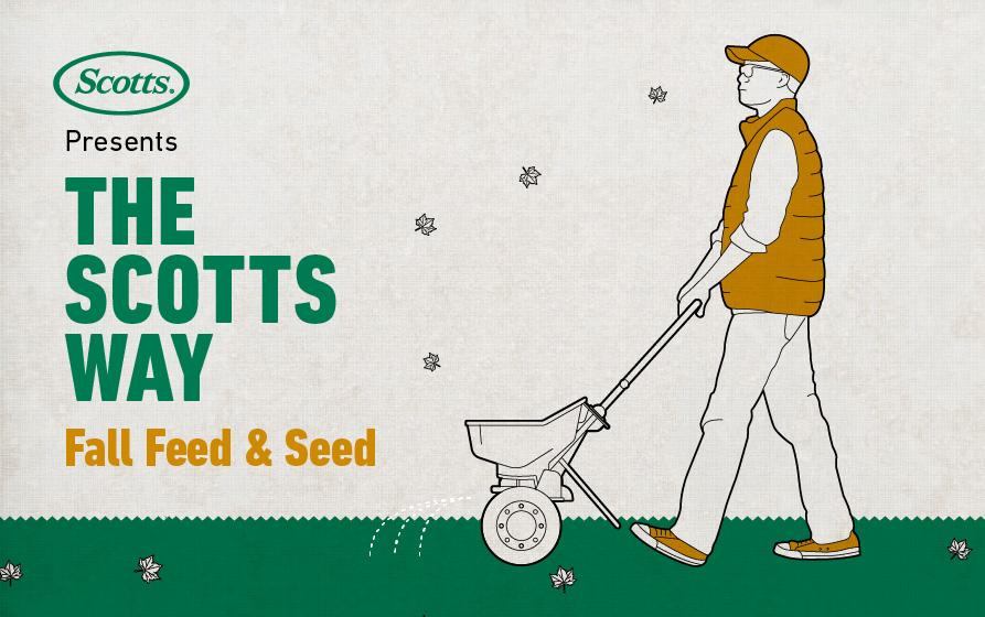 The Scotts Way: Fall Feed & Seed - Illustration of a man pushing a Scotts fertilizer spreader.