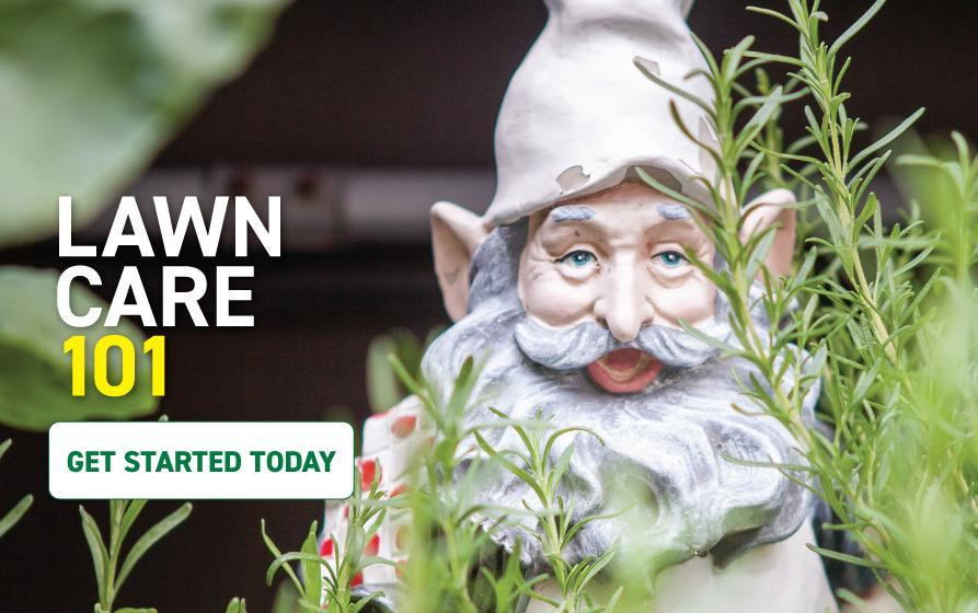 Lawn Care 101: Garden gnome in landscape bed