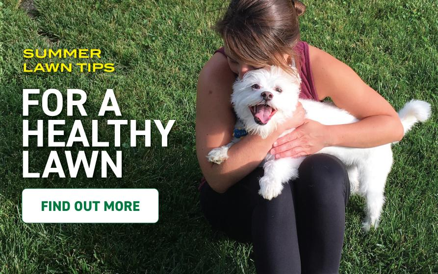 Summer Lawn Tips for a Healthy Lawn: young woman sitting on grass lawn while hugging small white dog